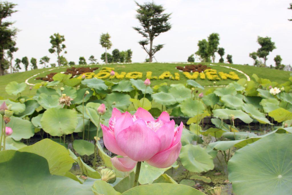 Hồ sen tại Bồng lai viên